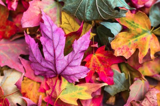 Autumnal Romance